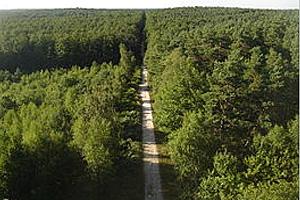 Орлеанский лес - самый обширный во Франции