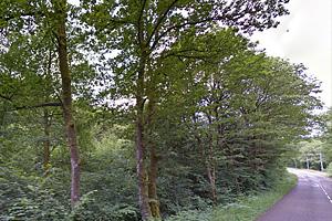Типичные лесополосы в Центральной Франции