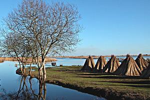 Болота Бриер (западная Франция)