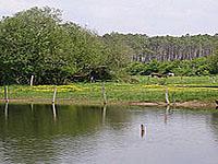 Пруд Бур ле Вьё (Аквитания, Ланды)
