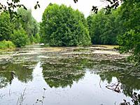 Пруд О Фурно (Лотарингия, Мёз)