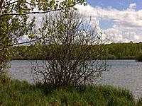 Пруд Жавуле (Центр-Долина Луары, Шер)