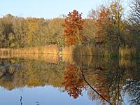 Пруд Лашосе (Лотарингия, Мёз)