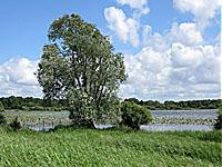 Озеро Гранд Льё (Земли Луары, Луара Атлантическая)