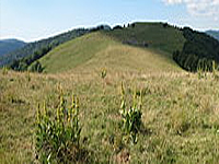 Гора Виссгрю (Вогезы)