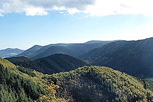 Лесные склоны Вогез