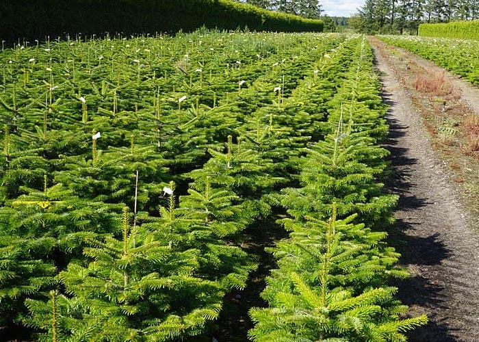 Лесная промышленность Франции: лесопосадки