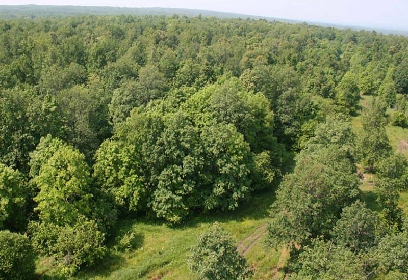 Широколиственные Западноприатлантические леса во Франции