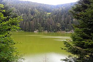 Зеленый цвет озера Вер у де Сульцеран  (Эльзас)
